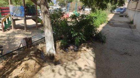 Вчера молилась, а сегодня полили деревья