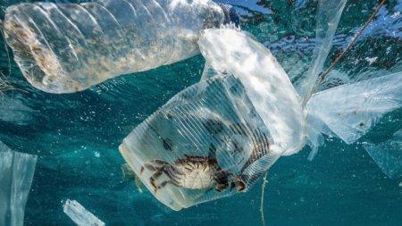 Разлагающиеся в морской воде пластиковые пакеты создали Японии