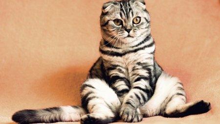 У кошки обнаружили коронавирус