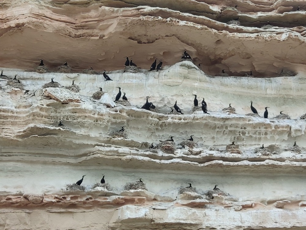 Эколог прокомментировал видео с птицей на побережье Актау