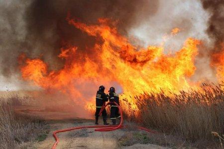 У побережья Каспийского моря загорелся камыш. Пожар тушат десятки спасателей