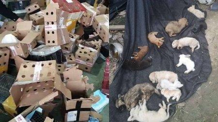 Пять тысяч мертвых кошек и собак нашли в Китае