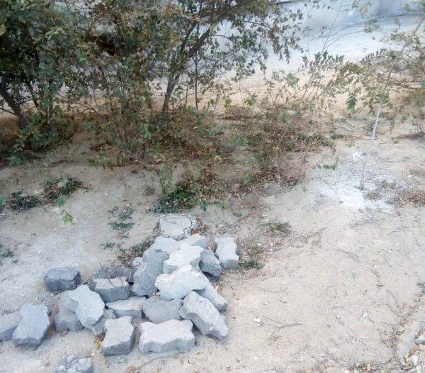 Деревья в Актау хотят сравнять с землей