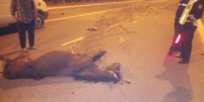 В Актау мать погибшего от столкновения с лошадью мотоциклиста пожаловалась на ход расследования ДТП