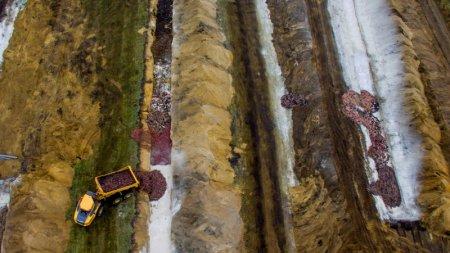 Тысячи убитых из-за коронавируса норок выбрались из могил в Дании