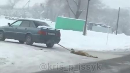 Собаку привязали к авто и протащили по дороге в Алматинской области