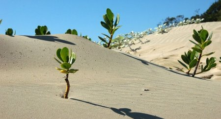 Густой лес появится на высохшем дне Аральского моря