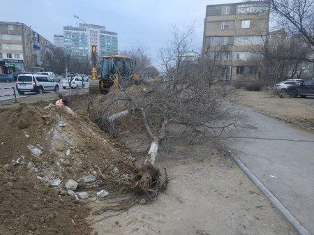 Живые деревья спилили в 7 микрорайоне Актау