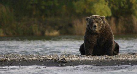 Медведицу выпустили на свободу после 20 лет неволи – душераздирающее видео