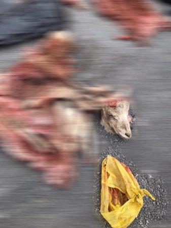 Браконьеров с мясом архаров на 26 миллионов тенге задержали в Мангистау