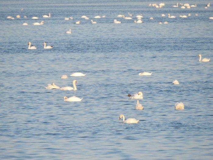 На озере Караколь насчитали более 15 тысяч птиц