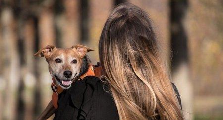 Собака или человек? Новая оптическая иллюзия озадачила пользователей Сети