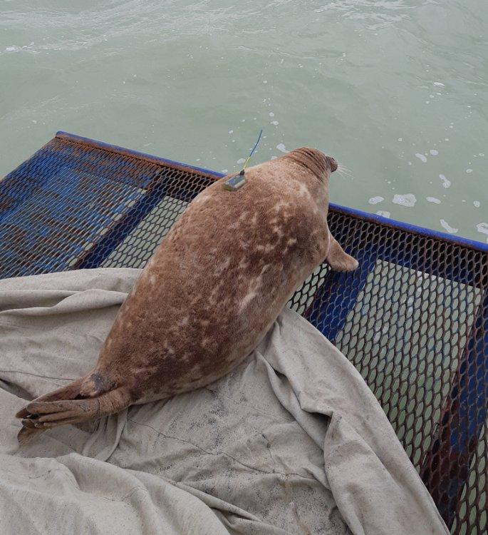 NCOC: Казахстанско-Российские комплексные исследования популяции каспийского тюленя