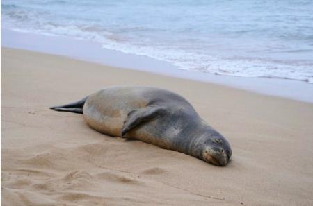 Десятки мёртвых туш тюленей могут всплыть на казахстанском побережье Каспия