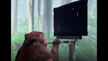 Илон Маск показал обезьяну, играющую на компьютере в Pong силой мысли. Следующий шаг — стримить и писать в твиттер