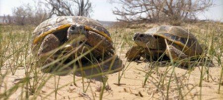 Черепахи проснулись