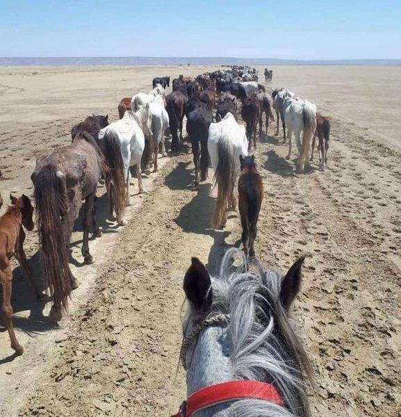 Умирающих от голода лошадей в степях Мангистау сфотографировал местный житель