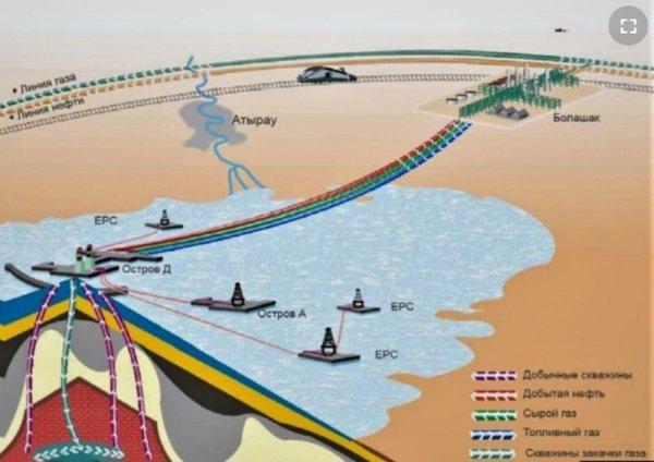 Власти одобрили проект канала Кашаган по дну Каспия: Что будет с морскими обитателями?