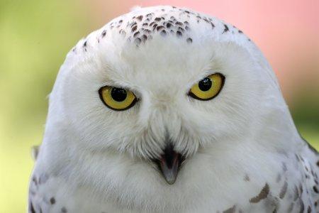 ФСО представила полярную сову, охраняющую Кремль от ворон
