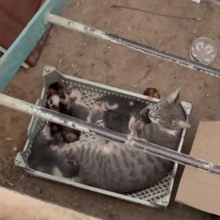 Котята с матерью