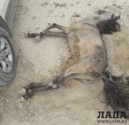 Волонтеры Мангистау опубликовали фото изможденных лошадей в селе Таушык
