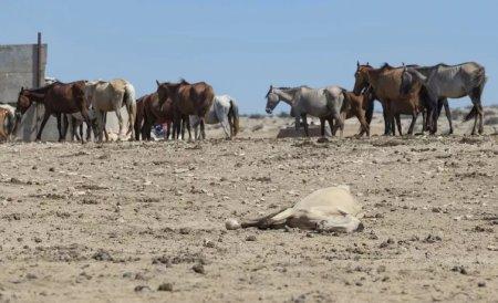 Из костей могу дом построить: Фермер Мангистау рассказал о засухе и гибели скота