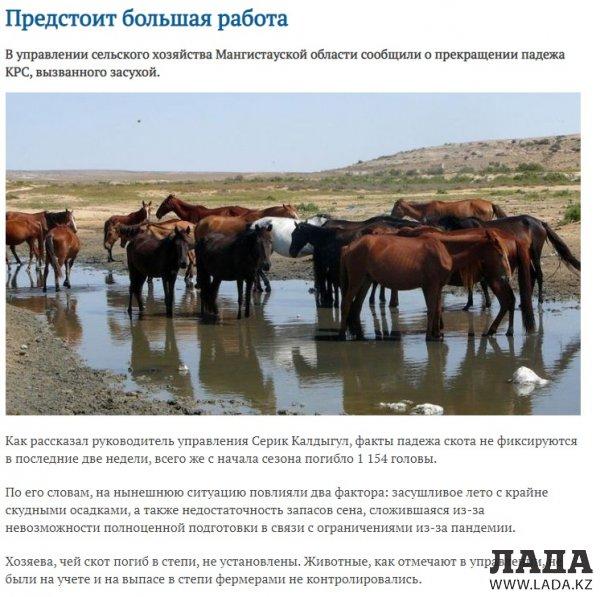 Цена слова: Сколько акимат Мангистау платит за положительные публикации о борьбе с засухой и падежем скота
