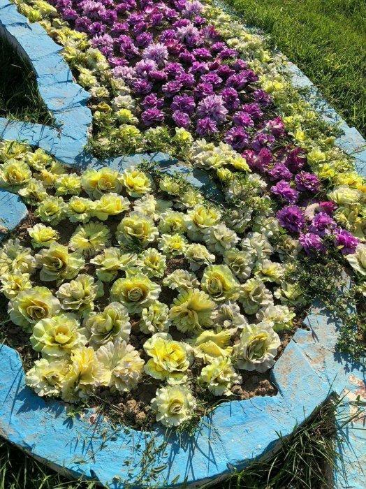 Кладбище в центре Актау: искусственные цветы в уличных клумбах ужаснули горожан
