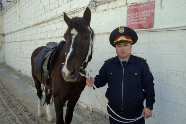Лошадей используют для поиска подкопов в СИЗО Актау