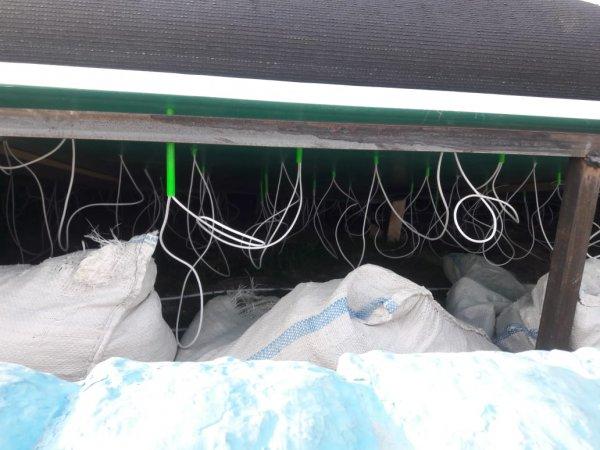 Стартовал национальный проект «Зелёный Казахстан»! В Актау заколосились пластиковые тюльпаны