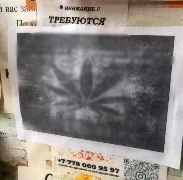 Автора наркограффити в Актау задержали на месте преступления